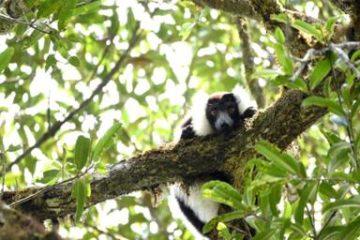 जलवायु परिवर्तन के कारण मेडागास्कर के जंगल समाप्त हो सकते हैं