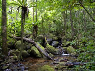 Madagascar forests may end due to climate change