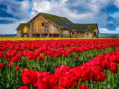 मानव जीवन सुखी फूल